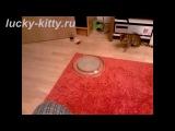 Лучшая в мире игрушка для кошек!