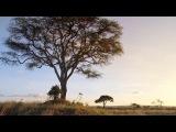 Микро Монстры с Дэвидом Аттенборо 6 Колония (2013)