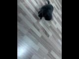 смишной прикол с кошкой